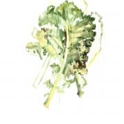Hands on Veggies - Lotion pour le corps - Peaux sensibles - Vegan, Naturelle & Bio - Select Store éthique Cosmétiques Vegans